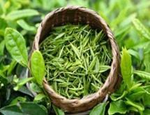 崂山绿茶---白盘