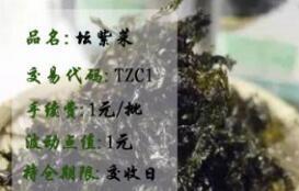 青岛汇海坛紫菜